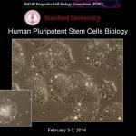 Week 1 - Human Pluripotent Stem Cells Biology